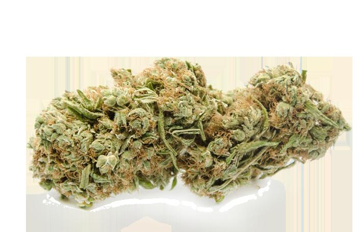 Cbd Bud Cannabis